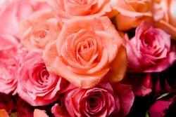 テーブルの上に一輪の花がある ...