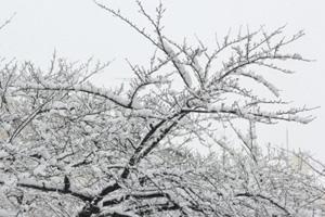 平均的に世界で一番暑い国、寒い国「平均気温マイナス56.1度も」