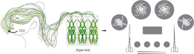 すっげぇSF...! 吐息で食用の藻を育てられるマスク『Algaculture』