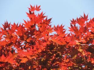 日本が誇れることランキング1位「四季がある」