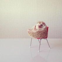 朝ごはん、ハリネズミ…、画像共有アプリInstagram発の写真集に注目集まる