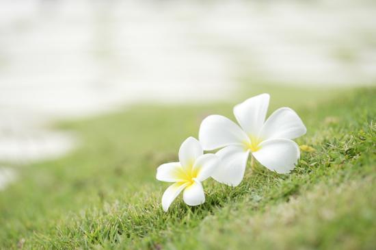目のかゆみや鼻づまり…花粉症の症状をやわらげる食材とは?