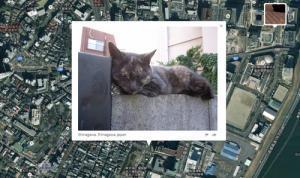 Googleマップに猫画像の場所を表示するサービス登場! 近所の猫も探せる?
