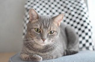 一眼レフ初心者が猫撮影に挑む! (8) 背景をボカしてオシャレな猫写真を撮る!!