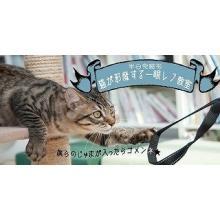 満席の「猫が邪魔する一眼レフ教室」、日程追加が決定!