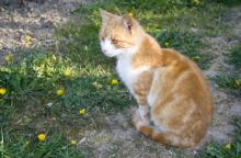 どこまで本当!? 猫にまつわる俗説・都市伝説4つ調べてみた