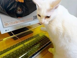 猫にキーボードを踏まれないための防御カバーが発売!