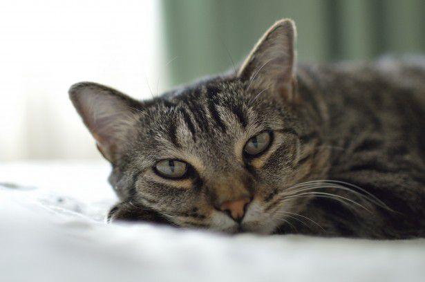 実はネコは人を「でかすぎる猫」だと思っているらしい