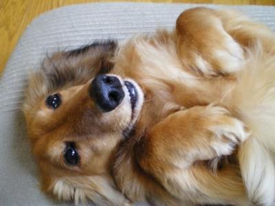服従だけじゃない! 犬の「仰向け」に隠された4つの意味コラム新着ニュース編集部のイチオシ記事この記事もおすすめコラムアクセスランキング