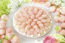 これは美しい...! キル フェ ボンの「白イチゴタルト」銀座&大阪で先行販売中です
