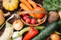 【女性FPイチオシ】ネットスーパーで食品ロス削減へ 在庫管理にも最適!
