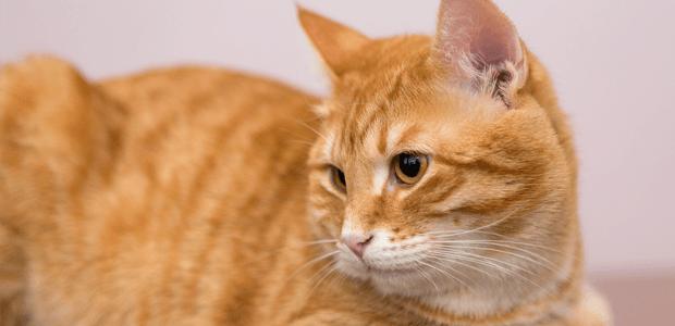 猫の【てんかん】、知っておきたいその症状や治療法とは?