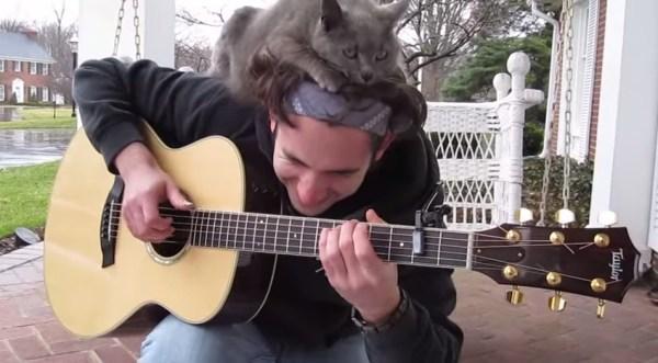【猫】可愛いから許しちゃう! ギター弾きとにゃんこのほのぼのバトル3選