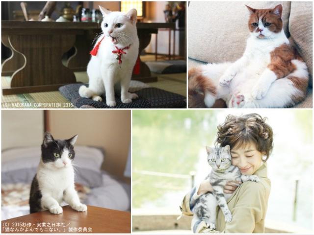 人気タレント猫続々 エンタメ界で高まる猫人気