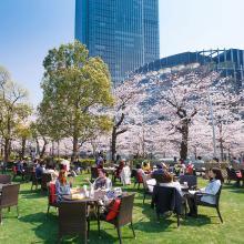 """桜を楽しむ季節限定ラウンジも!<span class=""""hlword1"""">東京ミッドタウン</span>で「Midtown Blossom 2016」"""