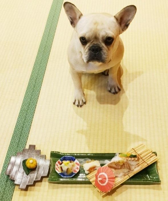 北斗晶 家族旅行で愛犬用の豪華な旅館ご飯公開「大興奮」