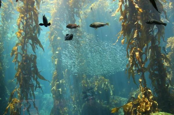 元気なときは動物園へ、心が沈んだら水族館へ行きたくなりませんか?