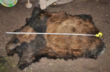 野生パンダ肉販売で懲役13年=兄弟ら9人に判決-中国雲南省