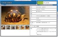 野毛山動物園でヘサキリクガメ誕生! 絶滅危惧種で国内での飼育はここだけ