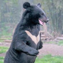人食い熊被害 もはや熊除けの鈴は通用しなくなったのか