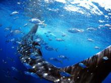 貴重かつ神秘的な、世界の海の水中写真展開催