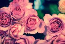 なぜか上手くいかない女子に教える、愛欲の星座占い(6/24-6/30)