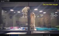 がんばれ、もうちょっとで一緒に遊べるぞ! 窓をよじ登って子犬のいるケージまで移動する子猫にほっこり