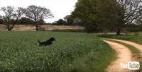ピョ〜ン! ピョ〜ン! 草むら大好きワンコが大はしゃぎでジャンプする姿が期待通りの神出鬼没ぶり