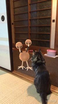 完全にドードーを見つめてる……! ポケモンが見えているかのような猫がTwitterで話題に