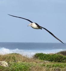海鳥が風速データ収集=衛星を補完、予測に貢献-東大など