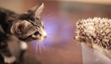 【動画】「ニャんだコレ……」おそるおそるハリネズミに触れようとする猫、結果は!?