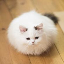 家猫でも野良猫でもOK! 自分の撮ったニャンスタグラムで目指せ電子書籍化!