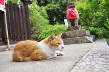 住んでいる場所別!日帰りで行ける「猫の街」がたまらにゃい