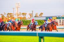 角居勝彦調教師 競走馬の育成に大きく影響するセレクトセール