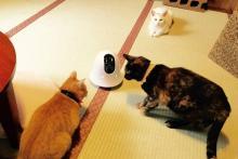 外出先から動かせるお留守番カメラ「ilbo(イルボ)」--ペットに声もかけられる