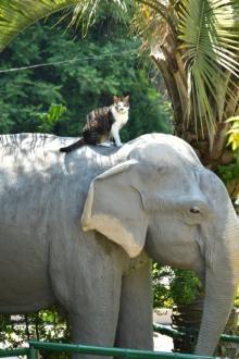 宣伝・接客担当猫のサバチョビ 悩みは猫の友達ができない
