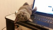 【おどろきネコ画像】飼い主にPCをさせまいとするネコの迫力が異常