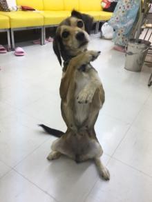 志村けん 「アイーン」完コピする犬公開、「やばかわ」の声