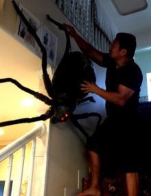 北斗晶 恒例ハロウィンの自宅飾り付け公開、巨大蜘蛛も登場