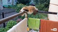 洗濯物!? ベランダで眠る猫ちゃんの格好がとんでもない