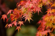秋の国内旅行ランキング、人気1位は香川。鳥取は「ポケモンGO」施策で大幅ランクアップ