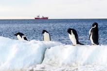 南極海に世界最大の保護区=日本の4倍、クジラなど生息