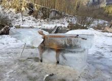 キツネが氷の塊に=ドナウ川に転落-ドイツ