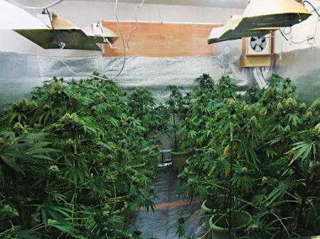 アパート借り切り大麻栽培
