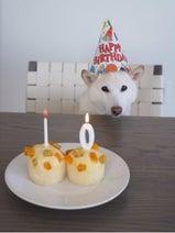 高垣麗子 ヘルシー手作りパンで愛犬の誕生日祝福、感謝つづる