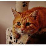 部屋が狭くても大丈夫! 猫が快適に過ごせる部屋の環境づくりとは?