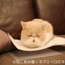 大阪・岐阜で「ねこ休み展」春の二都市巡回展--初登場作家にかけ流し動画も