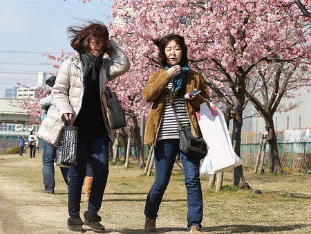 関東地方で春一番=北陸でも-気象庁