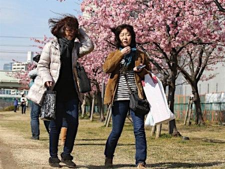関東地方で春一番