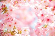 【東京】都内のオススメお花見スポット②~彼と、のんびりお花見デートするならココ!